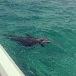 5 Kinds of Wildlife to Look For When You Rent a Boat in Destin